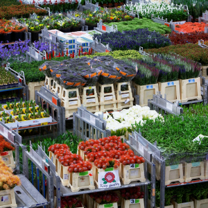 FloraHolland to optimise distribution process with 3iV Crystal voice solution from Zetes