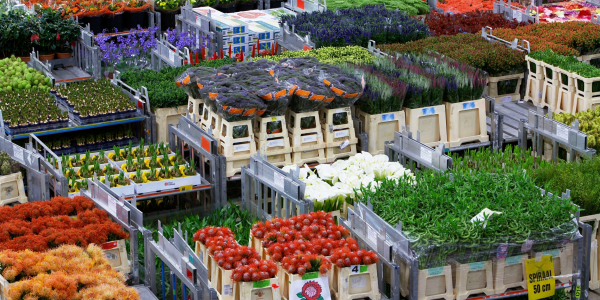 FloraHolland optimise son processus de distribution grâce à la solution vocale 3iV Crystal de Zetes